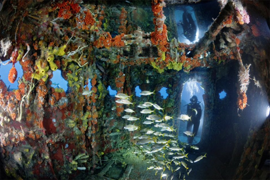 Artificial coral reef after ten years