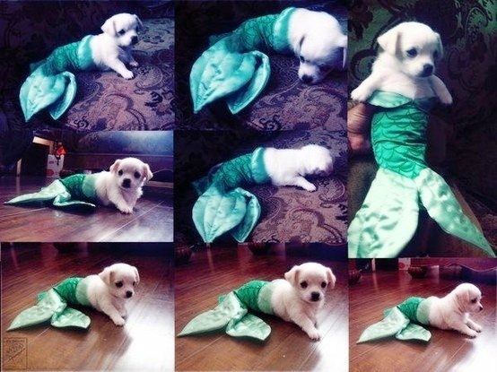 not a very scary halloween costume but such adorable right